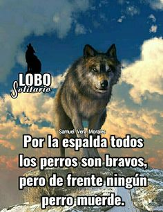 Funny Phrases, Naruto Shippuden, Wolves, Life Quotes, In This Moment, Motivation, Image, One Man Wolf Pack, Sayings And Quotes