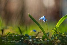 Spring Time by bagirushka on DeviantArt