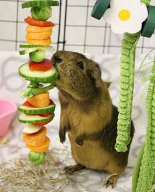 Sew a piece of string through sliced fruits and veggies for your guinea pigs, rats, hamsters, gerbils, and rabbits to make dinner more fun! Guinea Pig Food, Guinea Pig House, Pet Guinea Pigs, Guinea Pig Care, Diy Guinea Pig Toys, Diy Guinea Pig Cage, Diy Rodent Toys, Diy Rat Toys, Diy Hamster Toys