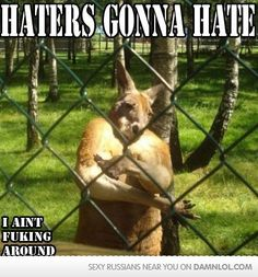 Funny pictures about Feels good to be a Kangsta. Oh, and cool pics about Feels good to be a Kangsta. Also, Feels good to be a Kangsta. Funny Animal Pictures, Funny Images, Funny Photos, Best Funny Pictures, Funny Cats, Funny Animals, Cute Animals, Animal Funnies, Thug Life