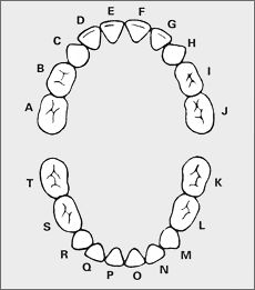 Primary and permanent tooth chart by letters primary and numbers flashcards table on primary tooth dentition ccuart Images