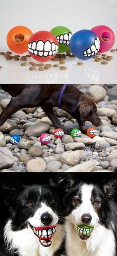 Dog's toy ball.... hahahahahaha!