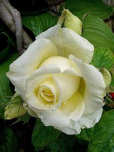 Beautiful2me : Photo