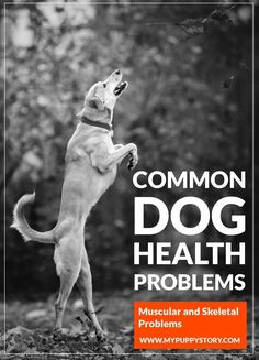 Common Dog Health Problems - Many owners routinely give their mature dogs supplements like chondroitin and glucosamine even before they contract arthritis, and ... mypuppystory.com