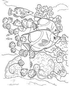 Coral Reef Coloring Book Sample