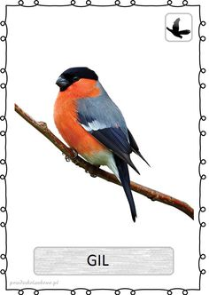 ptak15 Learning Time, Teaching Kids, Montessori, Creatures, Clip Art, Education, Pictures, Outdoor, Garden Birds