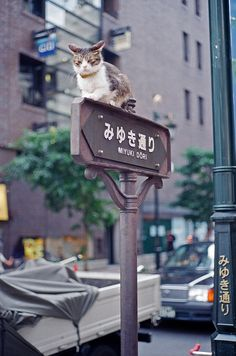 """Now this is a very special cat. """"All attention is on me!!""""  --yumenomusume:    leica m750 (5) by guchang gump on Flickr."""
