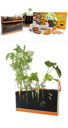 """Visio racines et Visio """"vers de terre"""". Vivarium 2 en 1 pour observer les racines et les lombrics. En vente sur www.radisetcapucine.com"""