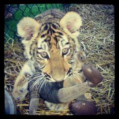 Mischa the cub