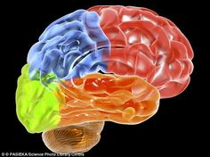 Frontotemporal dementia is an uncommon type of dementia, estimated to affect around 16,000 people in the UK. The front (red) and temporal (orange) lobes of the brain become damaged,causing symptoms which include changes in personality and behaviour, and difficulties with language