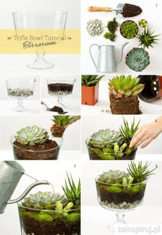 16 DIY Home Decor Ideas Trifle Bowl Terrarium Succulents Home Gardening- love it!