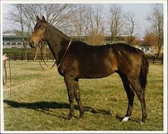 Forego in retirement at the Kentucky Horse Park
