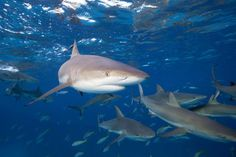 Sharks have a fierce reputation, but fascinating biology. Here we'll explore ten facts about sharks