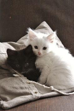 cat hug black cat white cat - Google Search