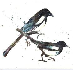 magpie tattoo design - Google Search