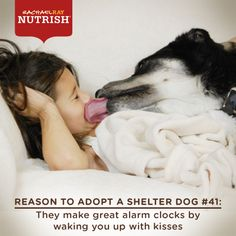 Another great reason to #adopt a shelter #dog