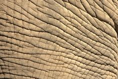 Elephant_Skin_by_BonsEYE.jpg (1600×1067)