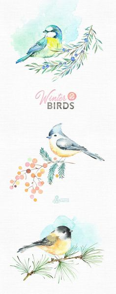 Winter Birds 2. Watercolor holiday clipart tit titmouse