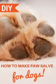 The cold weather can wreak havoc on our dogs' paws causing cracks, bleeding, and, if left untreated, an infection. We have a simple routine to keep all the paws in our home properly cared for during the cold winter and hot summer months. I Love Dogs, Puppy Love, Dog Paws, Homemade Dog, Dog Grooming, Grooming Salon, Dogs And Puppies, Doggies, Dog Mom