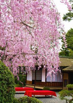 Seiryutei #japan #kyoto
