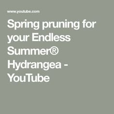 Learn how to prune your Endless Summer® hydrangeas in the spring to maximize the season's blooms. Hydrangea Care, Hydrangeas, Endless Summer Hydrangea, Spring, Youtube, Gardening, Ideas, Lawn And Garden, Thoughts