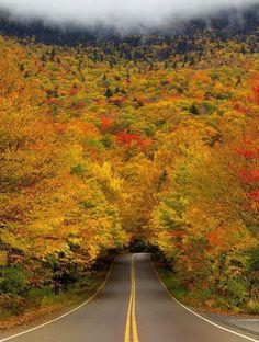 Karabük/Bartın arası ağaç tünelli yol