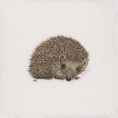 Hedgehog HAnd Embroidery   by richman_helen
