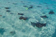 30 fotos de agua de mar tan cristalina que te harán dudar si se trata de una piscina (en Islas Caimán)