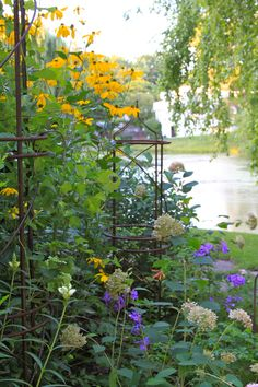 "Further along Rudbeckia ""Herbstsonne"", phlox, and fading blooms of Invincibelle Spirit hydrangea. So,so pretty!!"