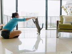 Play So You Don't Pay - How to Outsmart Your Cat and Have a Stylish Home on HGTV
