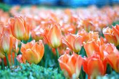 beautiful images of spring season - Google Search