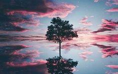 Le test de l'arbre de Karl Koch — Nos Pensées Kochi, Reflection, Meditation, Clouds, Sunset, Outdoor, Instagram, 1950, Public Speaking