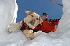 Avalanche Resuce dog and Handler