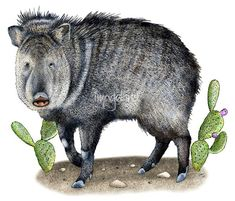 Image result for paintings of javelina