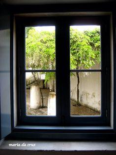 Glicínia através da janela