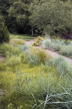 Canyon Prince wild rye (foreground), autumn moor grass, and blue oat grass grow together in a meadow garden Meadow Garden, Rain Garden, Dry Garden, Short Ornamental Grasses, Online Landscape Design, Nice Landscape, Blue Oat Grass, Grass Alternative, California Native Garden