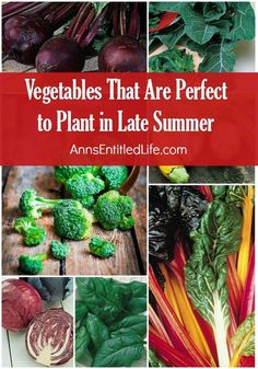 Vegetables That Are Perfect to Plant in Late Summer