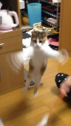 I Love Cats, Cute Cats, Funny Cats, Funny Shit, Hilarious, Pretty Pictures, Funny Pictures, Harry Potter, Perfectly Timed Photos