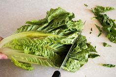 How to cut romaine lettuce for salads the fastest and easiest way possible. Bearded Dragon Diet, Learn To Cook, Best Diets, Lettuce, Cabbage, Salads, Food And Drink, Herbs, Fruit