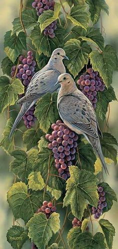 Vineyard-Mourning Doves ~ by Rosemary Millette ~ Wild Wings