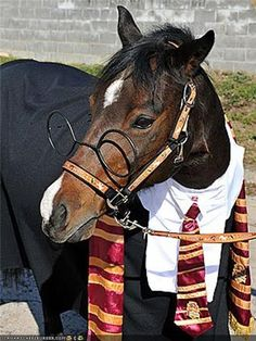 10 Amazing Halloween Costume Ideas for Your Horse