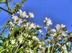 Fehér virágok Flowers, Plants, Beautiful, Plant, Royal Icing Flowers, Flower, Florals, Floral, Planets