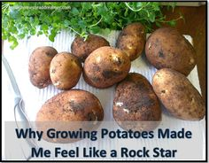 Homestead Dreamer | Why Growing Potatoes Made Me Feel Like a Rock Star | #prepbloggers #potatoes #growyourown