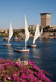 Egypt | Kitchener island towards Elephantine Island and the Movenpick hotel.