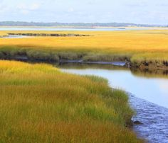Up close photo captures the textures and beauty of the salt marsh. photo matted to with white mat. Landscape Photography Tips, Scenic Photography, Landscape Photos, Landscape Art, Landscape Paintings, Aerial Photography, Night Photography, Creative Landscape, Salt Marsh