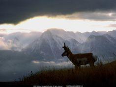 taustakuvat kuvia - Villieläimet: http://wallpapic-fi.com/national-geographic-kuvat/villielaimet/wallpaper-38583