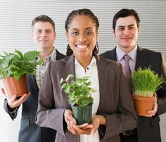 How to Care for Office Plants