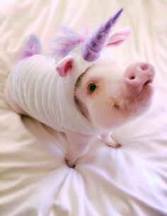 See everyone wants to be a unicorn,.even cute little pigs Cute Baby Pigs, Cute Piglets, Cute Babies, Baby Piglets, Cute Little Animals, Little Pigs, Cute Funny Animals, Teacup Pigs, Mini Pigs