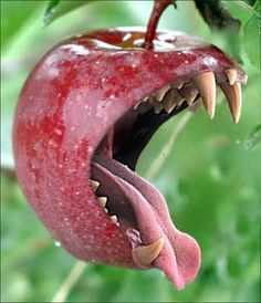 The fruit is rusting on the vine. A fruit is calling from the trees. I'll be the garden , you be the snake, All of my fruit is yours to take. Don't let the fruit rot under the vine, Fill up your cup and let's drink the wine Picture Writing Prompts, Writing Pictures, Creative Writing Prompts, Writing Tips, Inference Pictures, Picture Prompt, Sentence Writing, Essay Writing, Trucage Photo