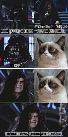 grump cat vs. the force and darth vader
